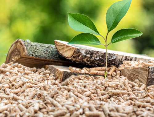 biomassa legnosa