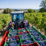 contrarietà alla riduzione indiscriminata delle rese massime per i vini generici
